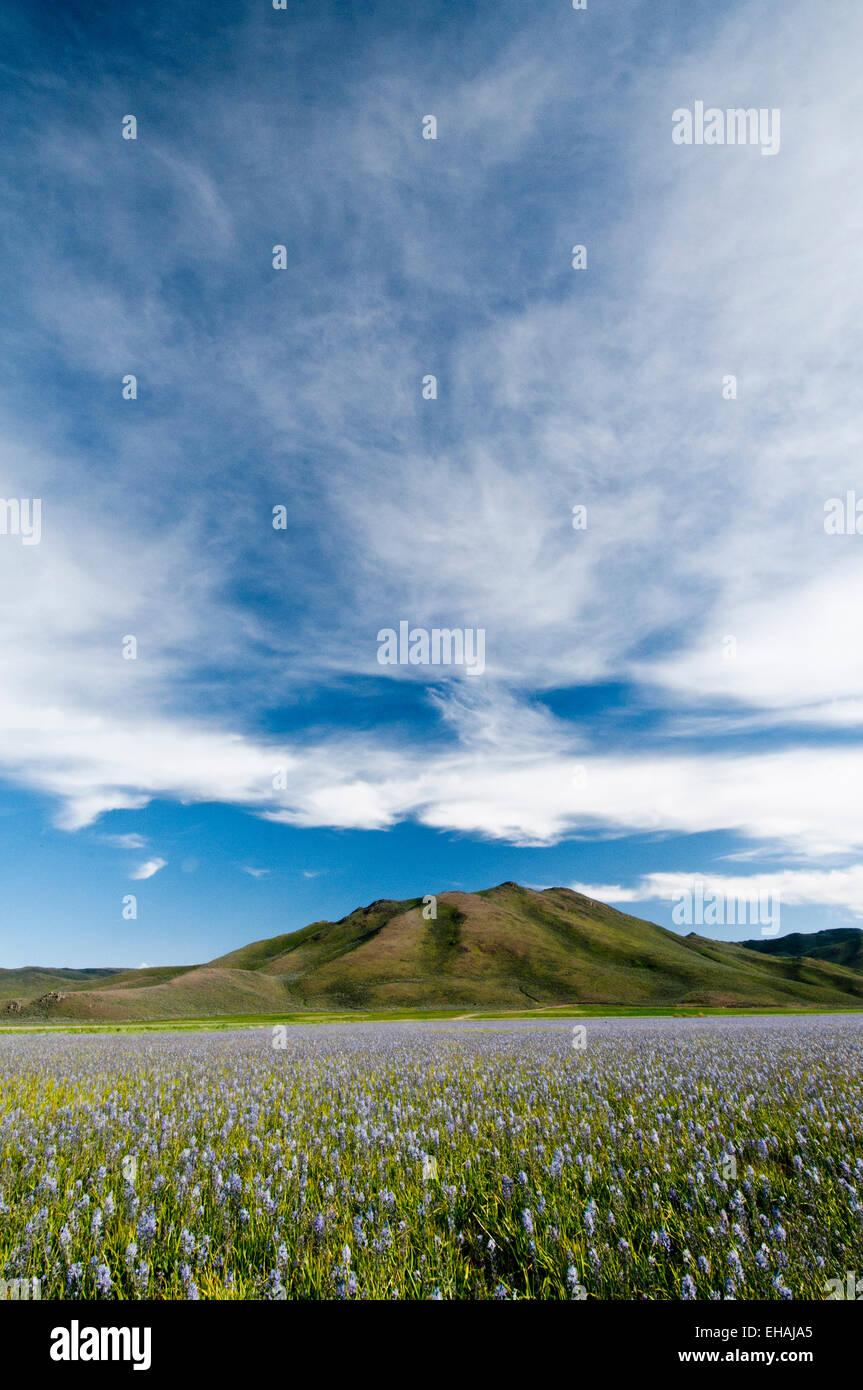 Camas meadow at Camas Prairie Centennial Marsh Wildlife Management Area, Idaho - Stock Image