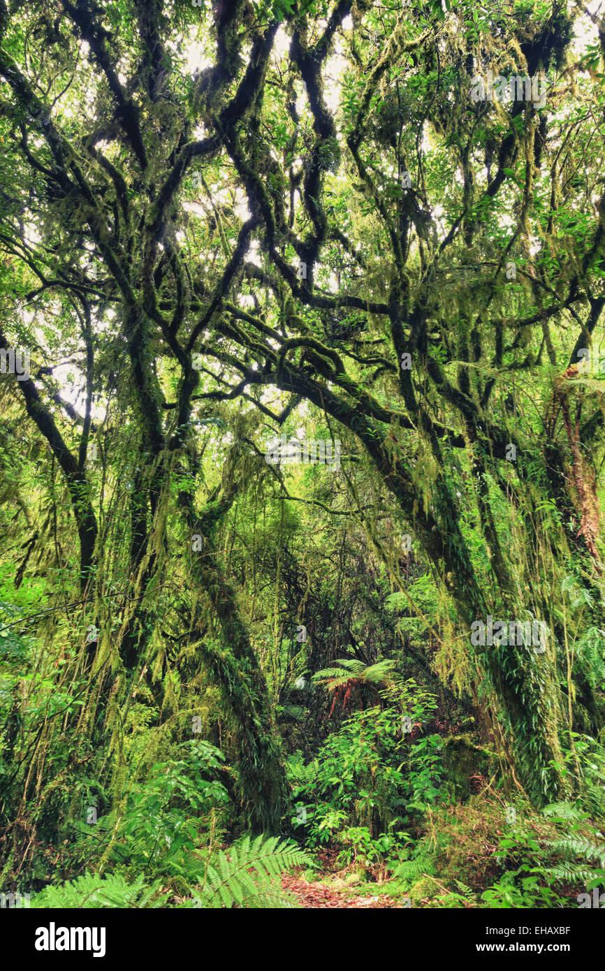 Native bush Stock Photo