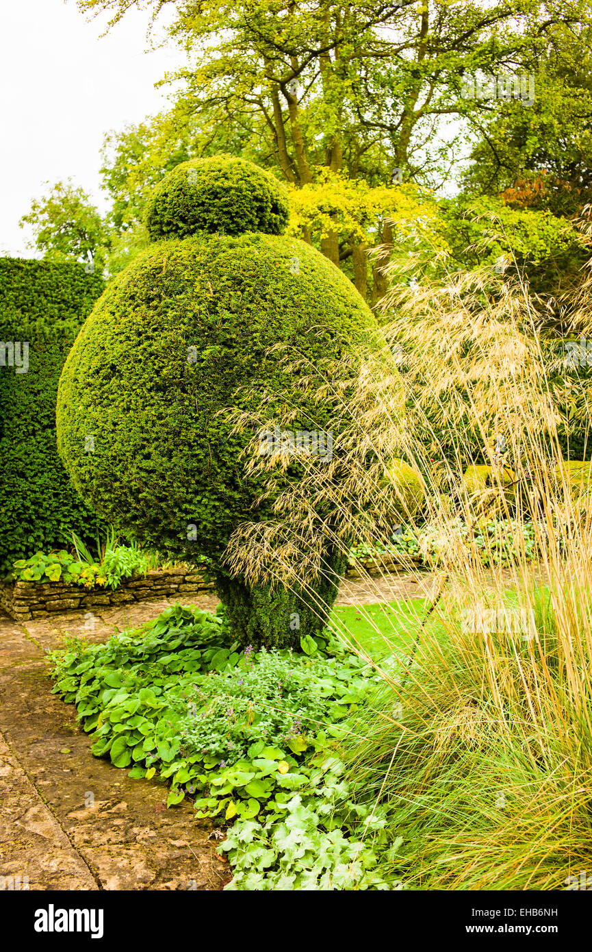 Topiary yew and tall Stipa grasses in The Courts garden UK - Stock Image