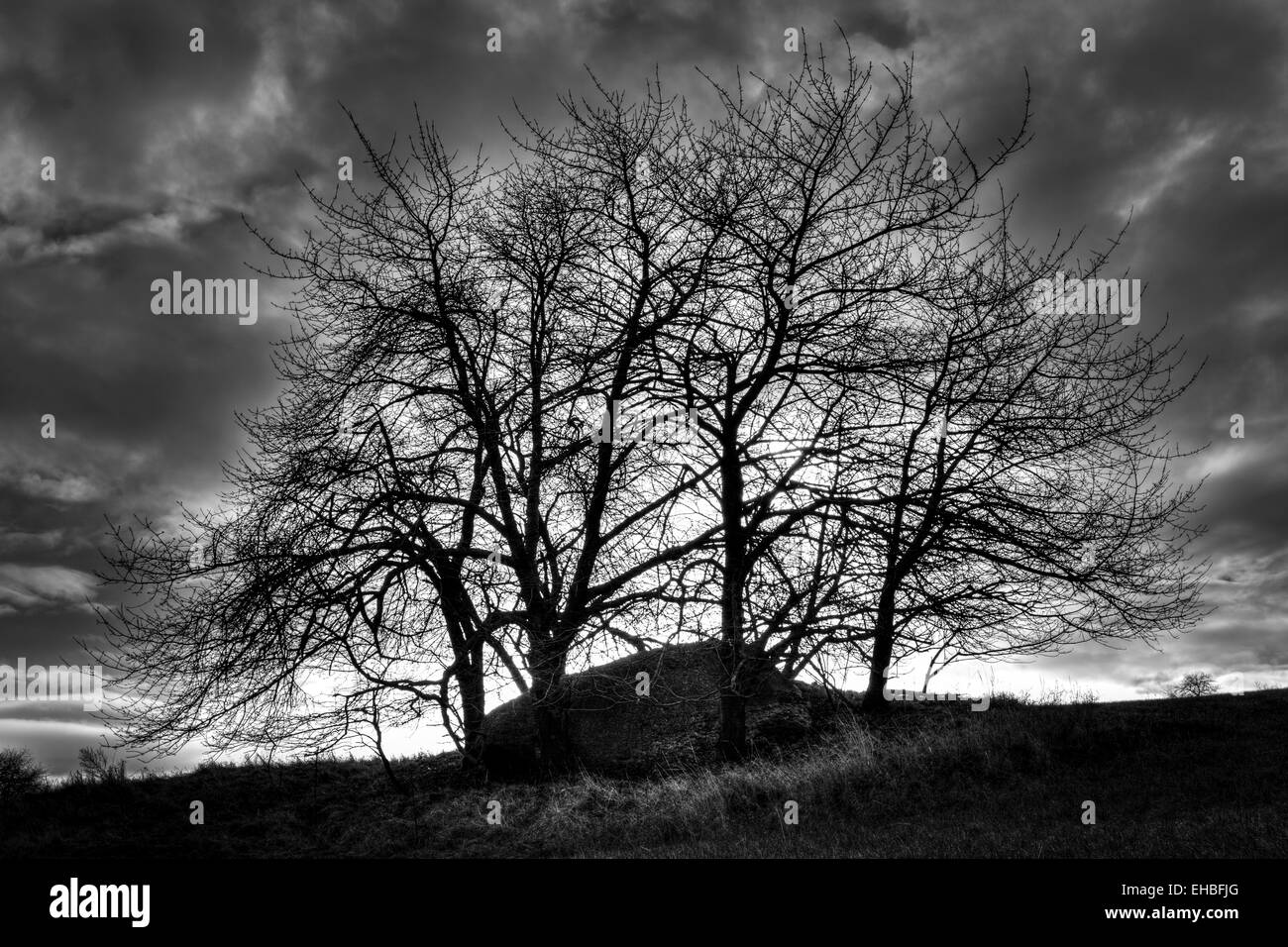 Mystical monolith hidden under trees before storm B&W photography - Stock Image