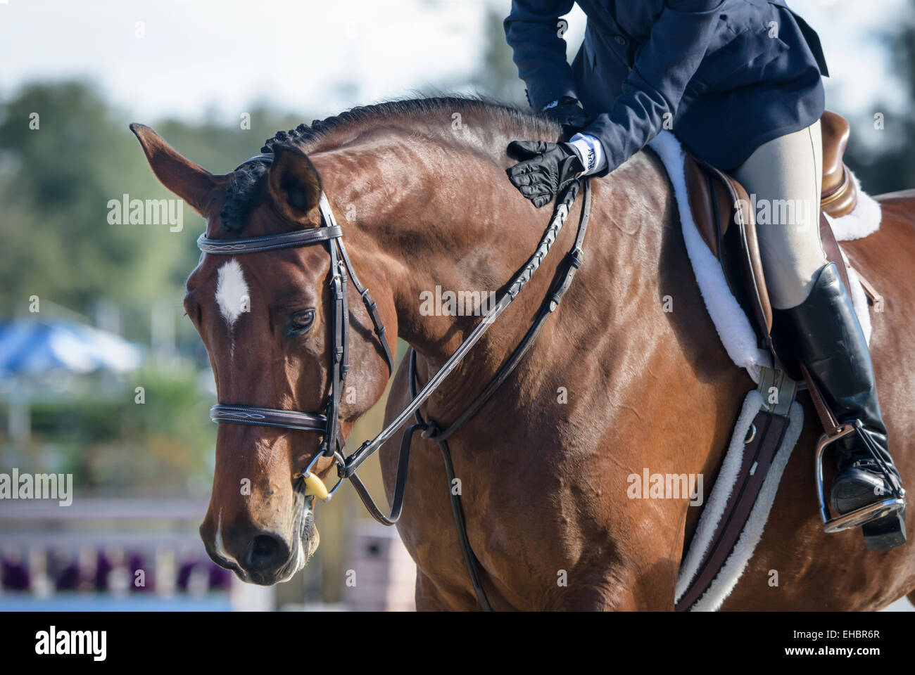 Intimate moment with horse and teenage girl at Hunter jumper show competition - Stock Image