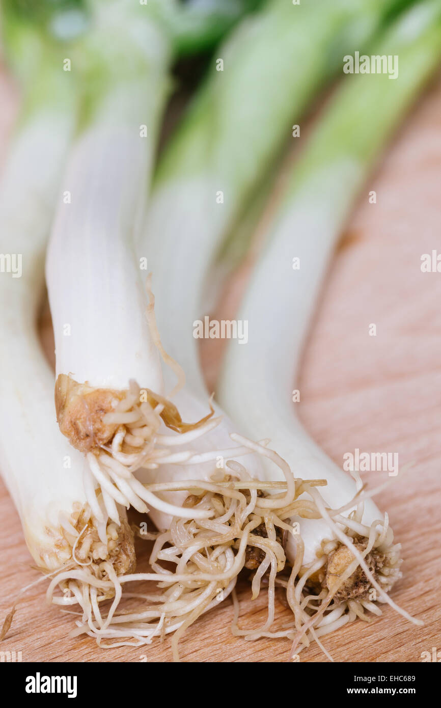 green spring onions on wooden background - Stock Image