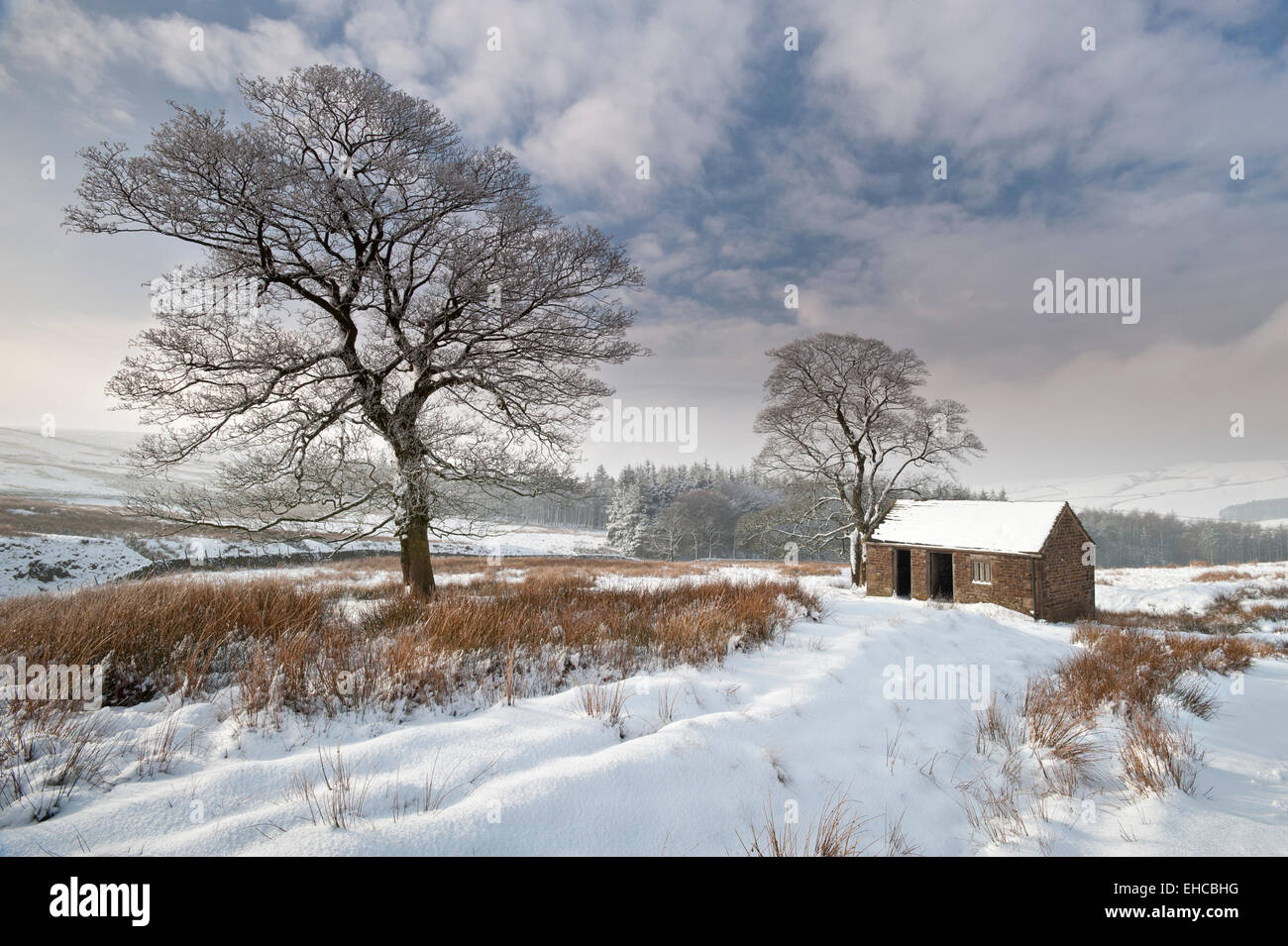Old Barn in Winter, Near Wildboarclough, Peak District National Park, Cheshire, England, UK - Stock Image