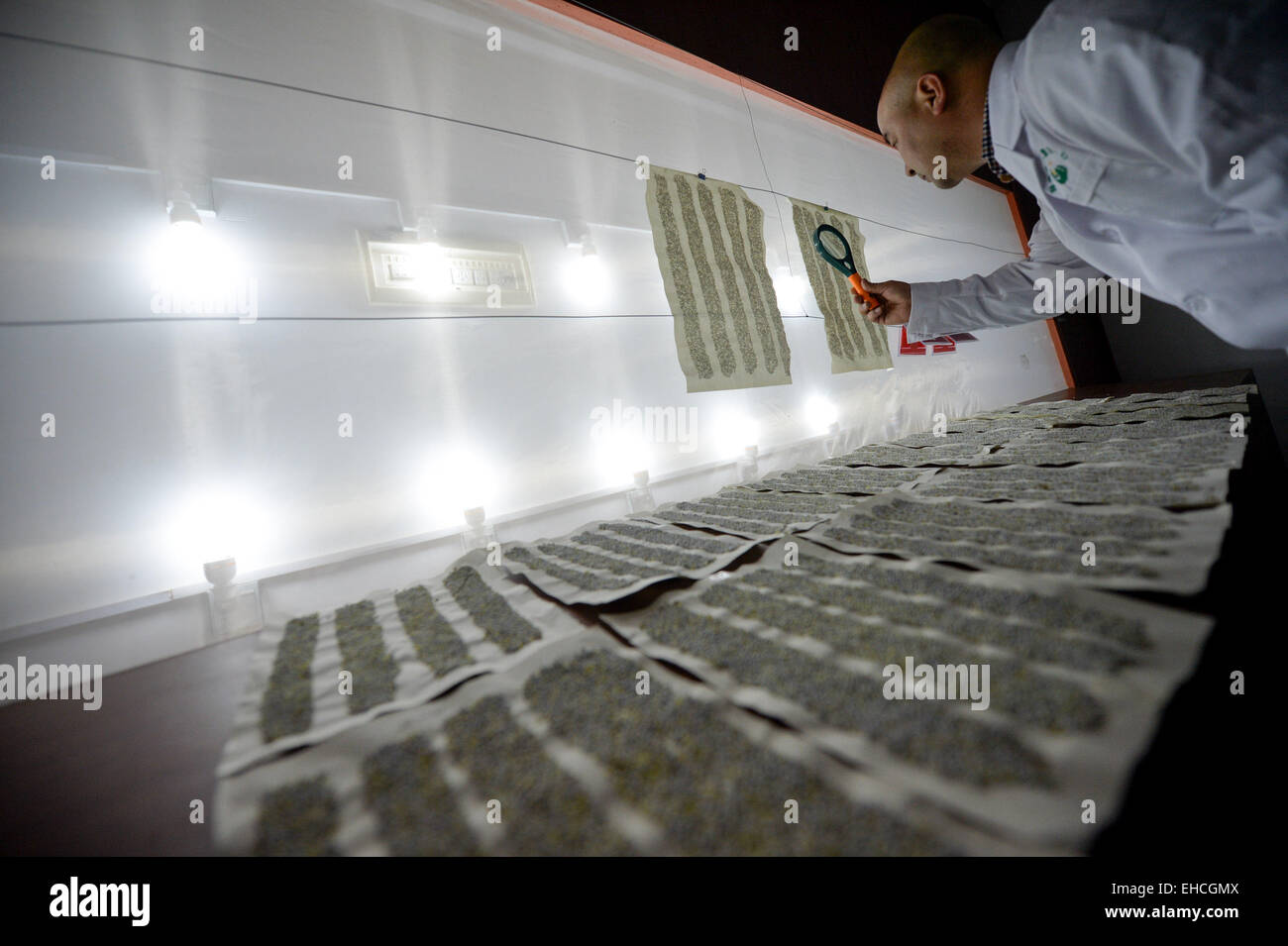 Changsha, China's Hunan Province. 11th Mar, 2015. A researcher checks trichogramma larvae in the pest natural - Stock Image