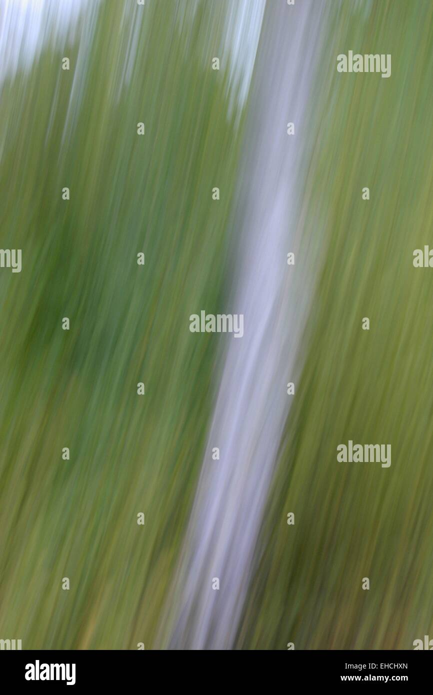 Abstract photo - Stock Image
