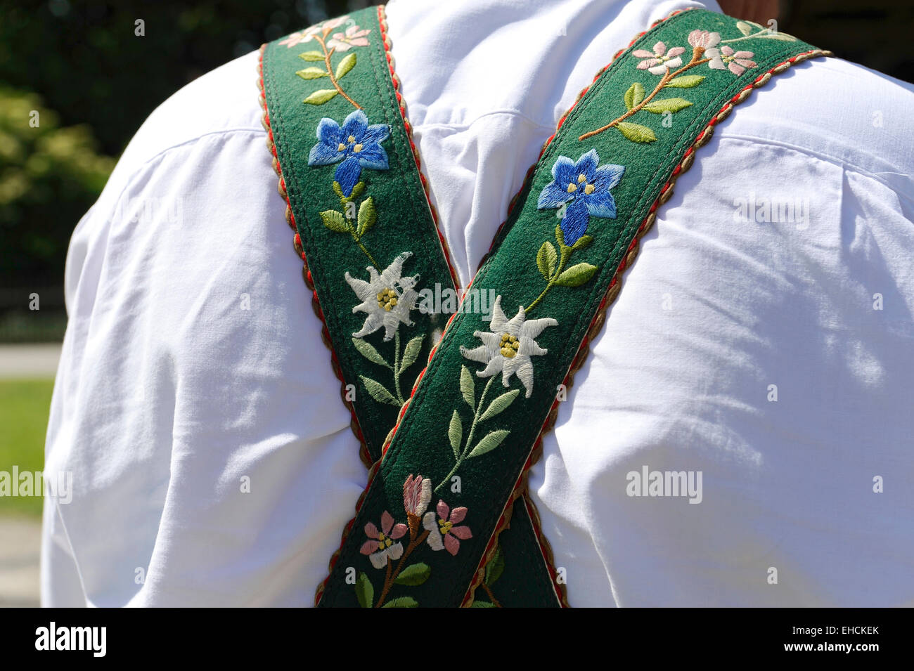 Suspenders embroidered with gentian and edelweiss flowers, lederhosen, Upper Bavaria, Bavaria, Germany - Stock Image