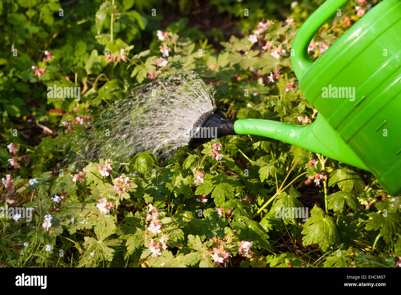Pflanzen gießen, watering the plants - Stock Image