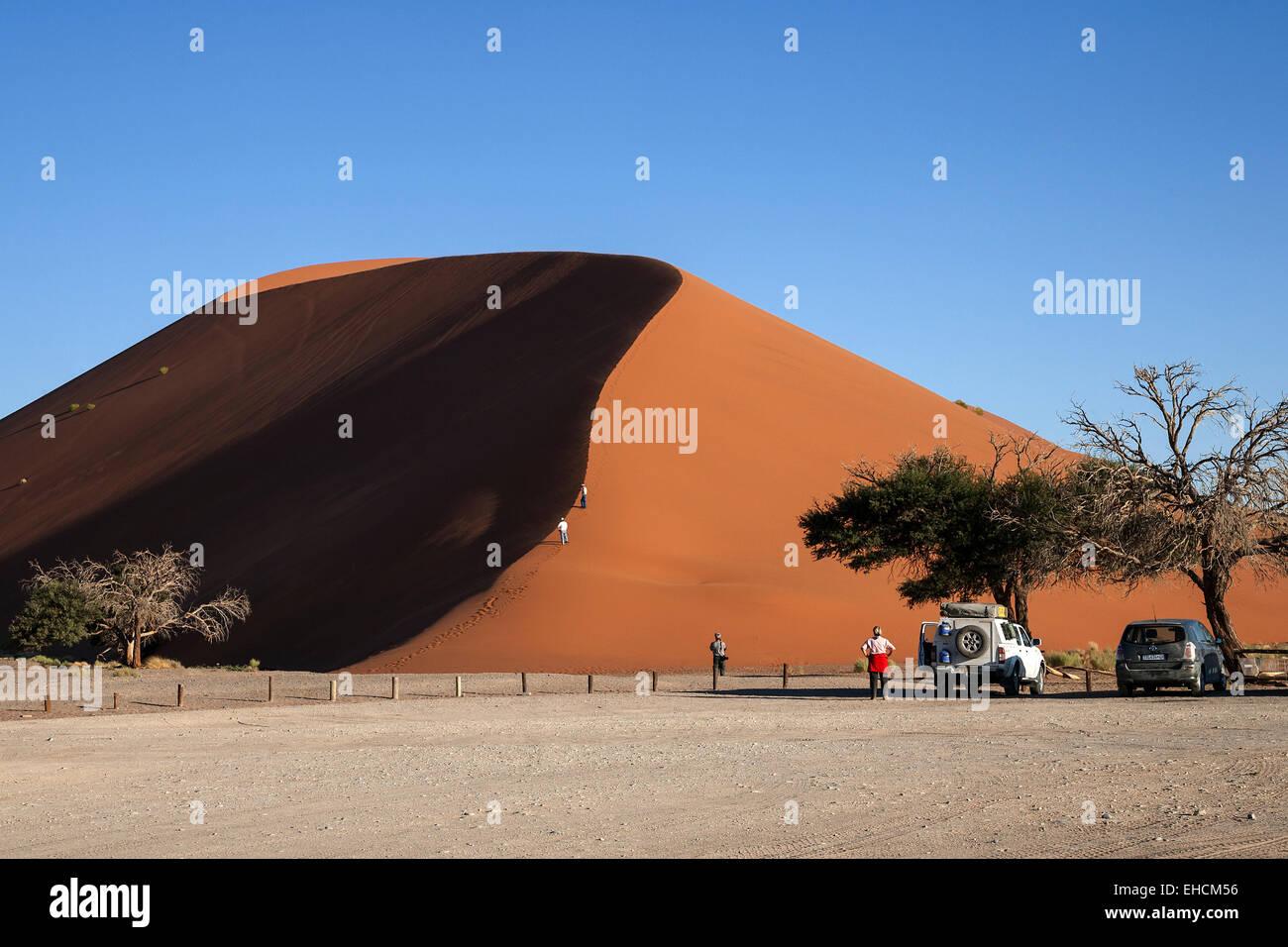 Parked vehicles in the parking lot in front of Dune 45, sand dunes, Sossusvlei, Namib Desert, Namib-Naukluft National - Stock Image