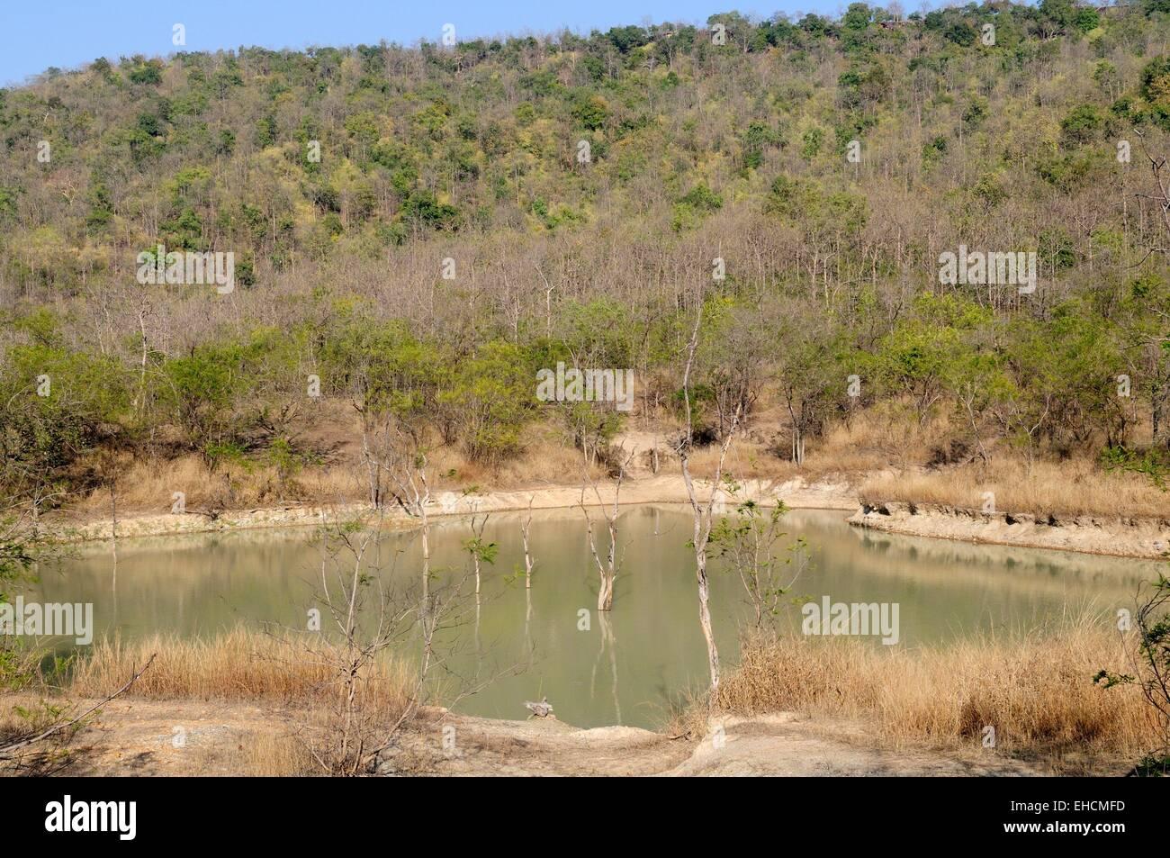 A watering hole at the beginning of the dry season Panna National Park Chhatarpur Madhya Pradesh India - Stock Image