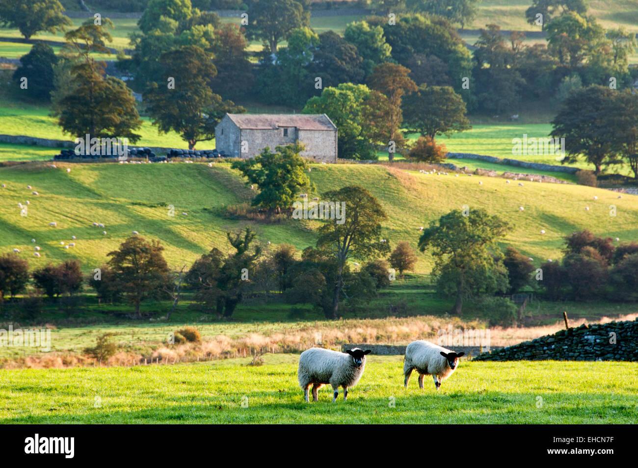 Rolling Countryside, Near Worton, Wensleydale, Yorkshire Dales National Park, Yorkshire, England, UK - Stock Image