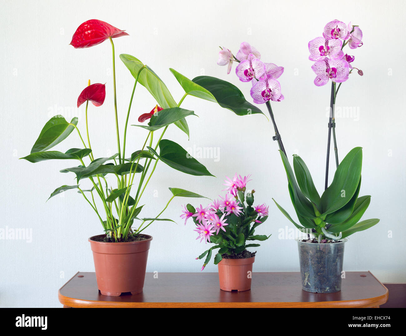 Live potted plants in pots at  interior - Stock Image