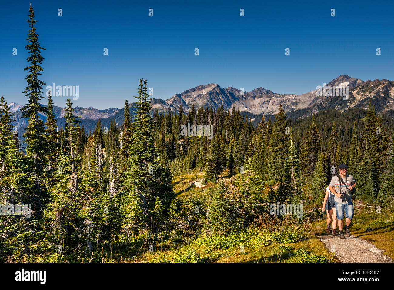 Selkirk Mountains, hikers on trail, view from South Parapet viewpoint in Mount Revelstoke Nat Park, British Columbia, - Stock Image