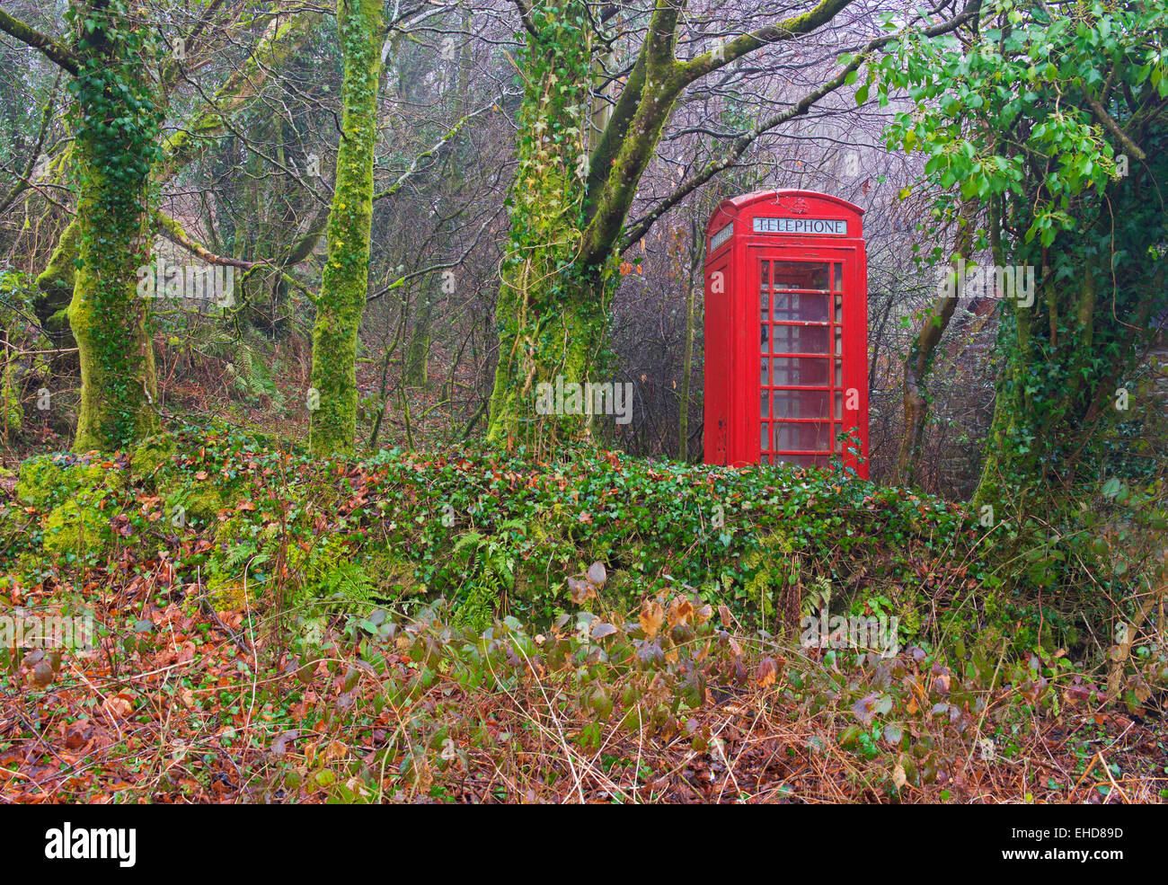 Red telephone box escaping into the wild, England UK - Stock Image