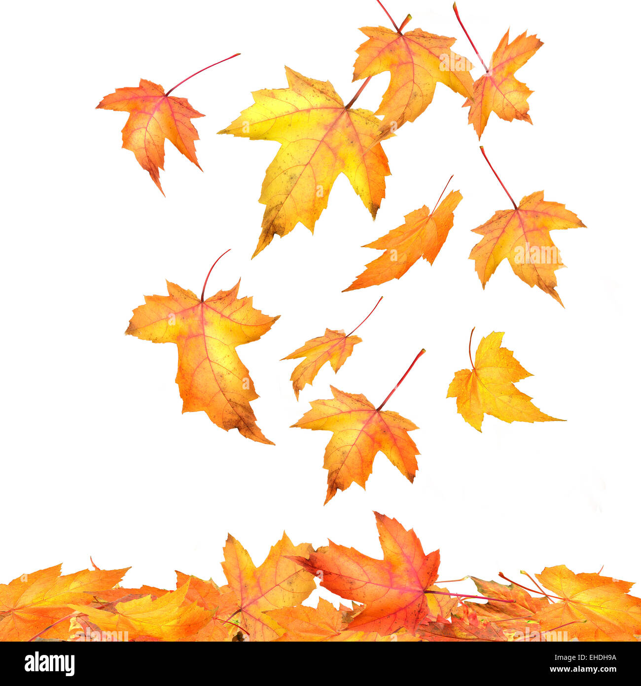falling leaves stock photos falling leaves stock images alamy