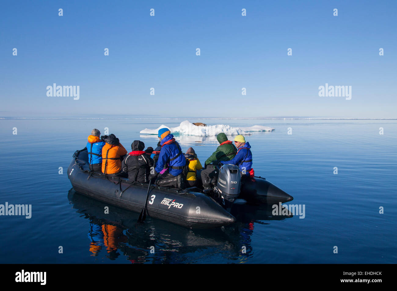Tourists in inflatable boat watching male walrus (Odobenus rosmarus) resting on ice floe in the Arctic sea, Svalbard, - Stock Image