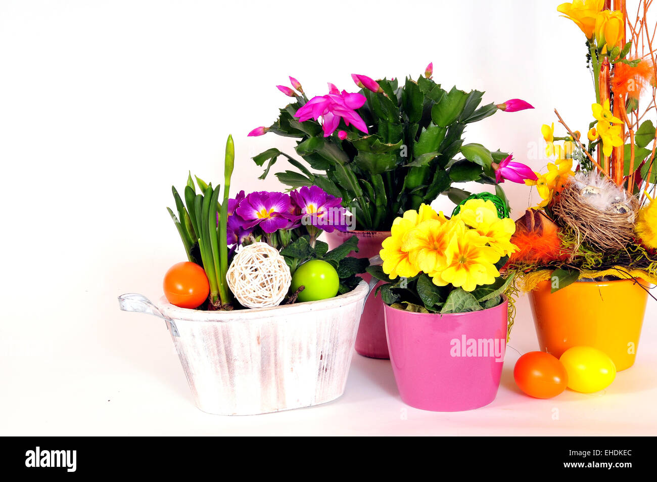 Spring Primrose Easter Flower Stock Photo 79591300 Alamy