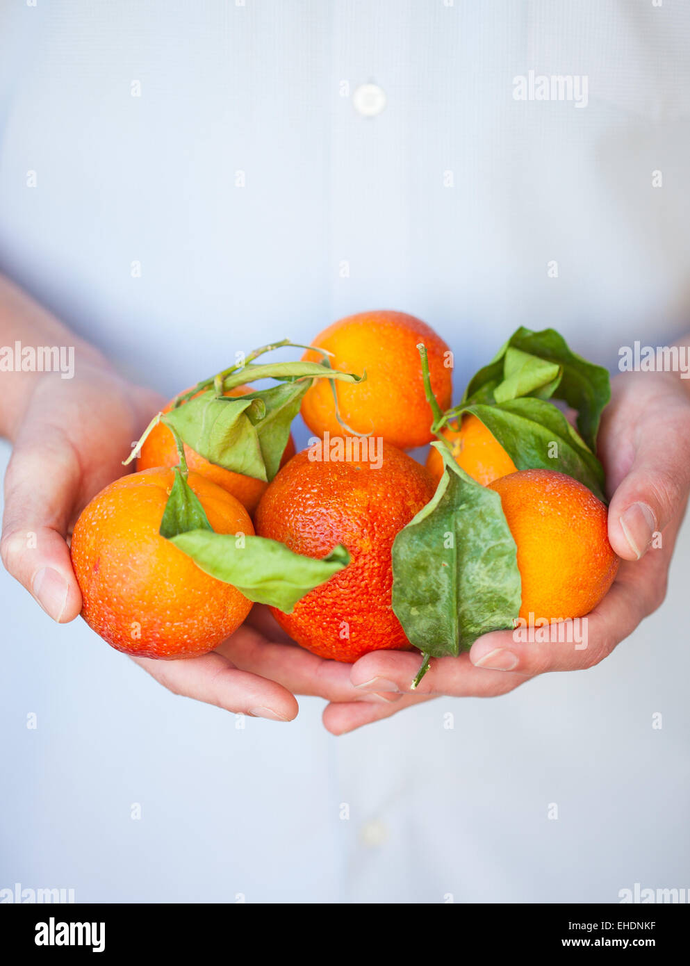 Hands holding blood oranges with leaves - Stock Image
