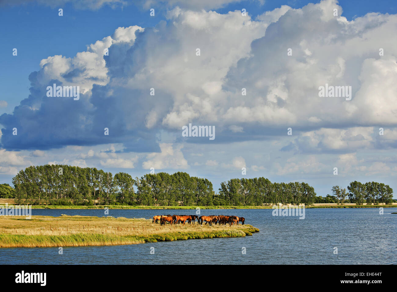 Poel island, Mecklenburg-Vorpommern, Germany - Stock Image