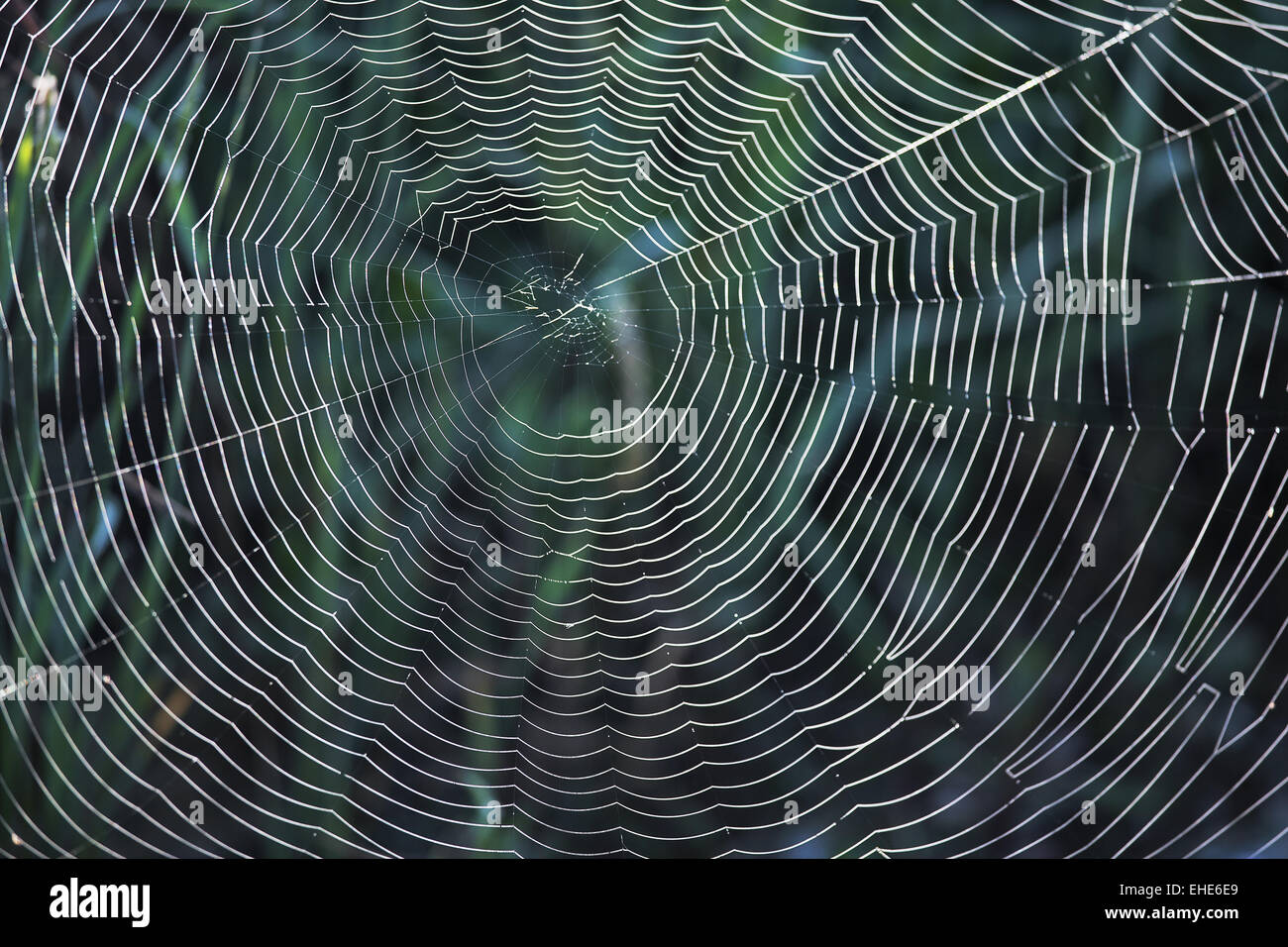 Spider web against the light - Stock Image