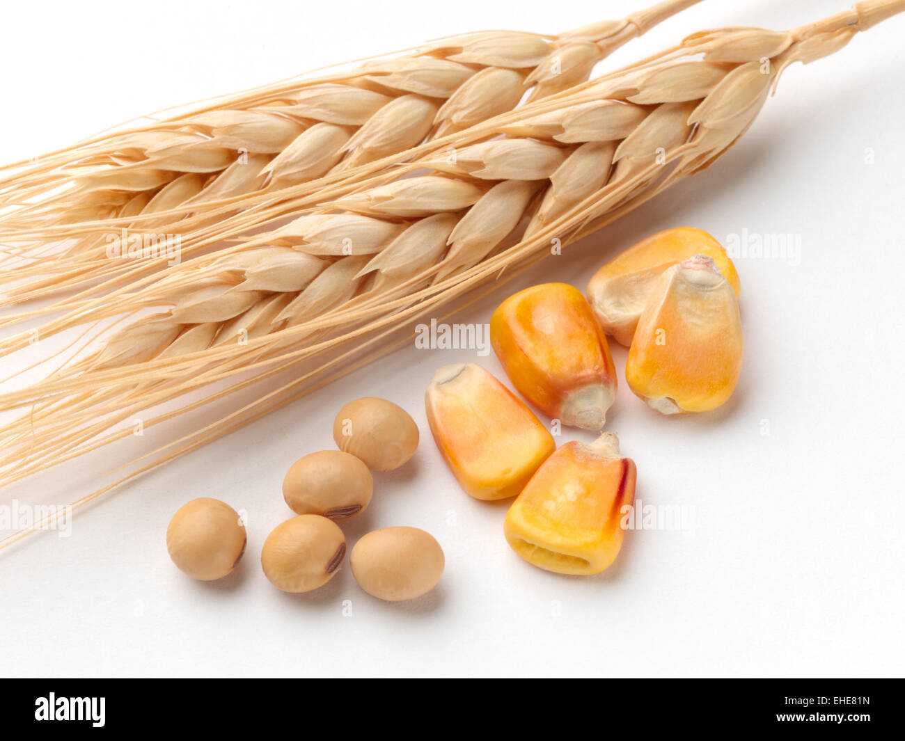 Sources of ethanol - Stock Image