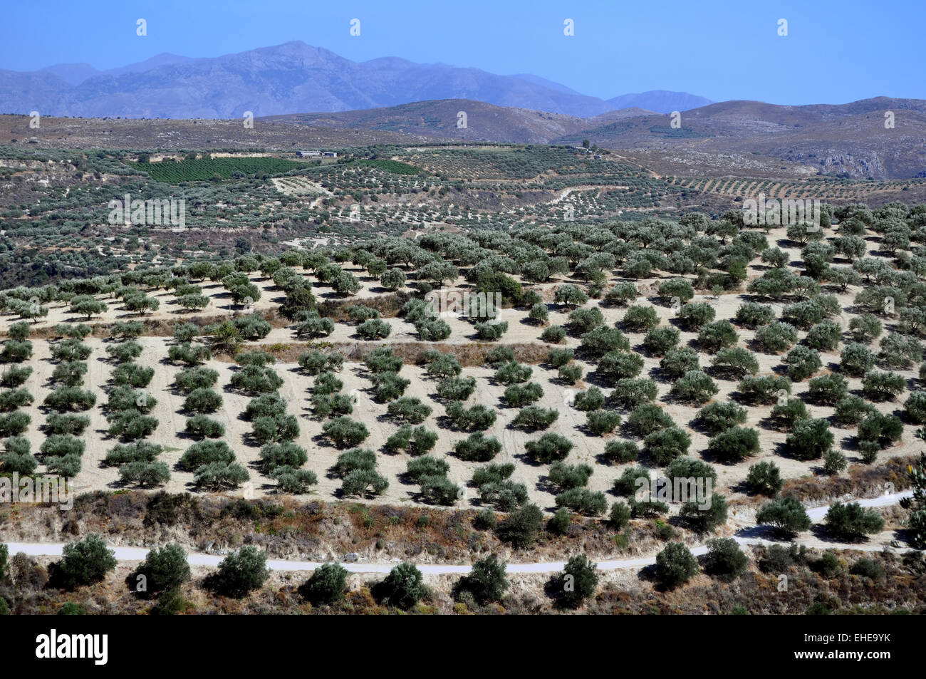 Agriculture in Crete, Greece. Stock Photo