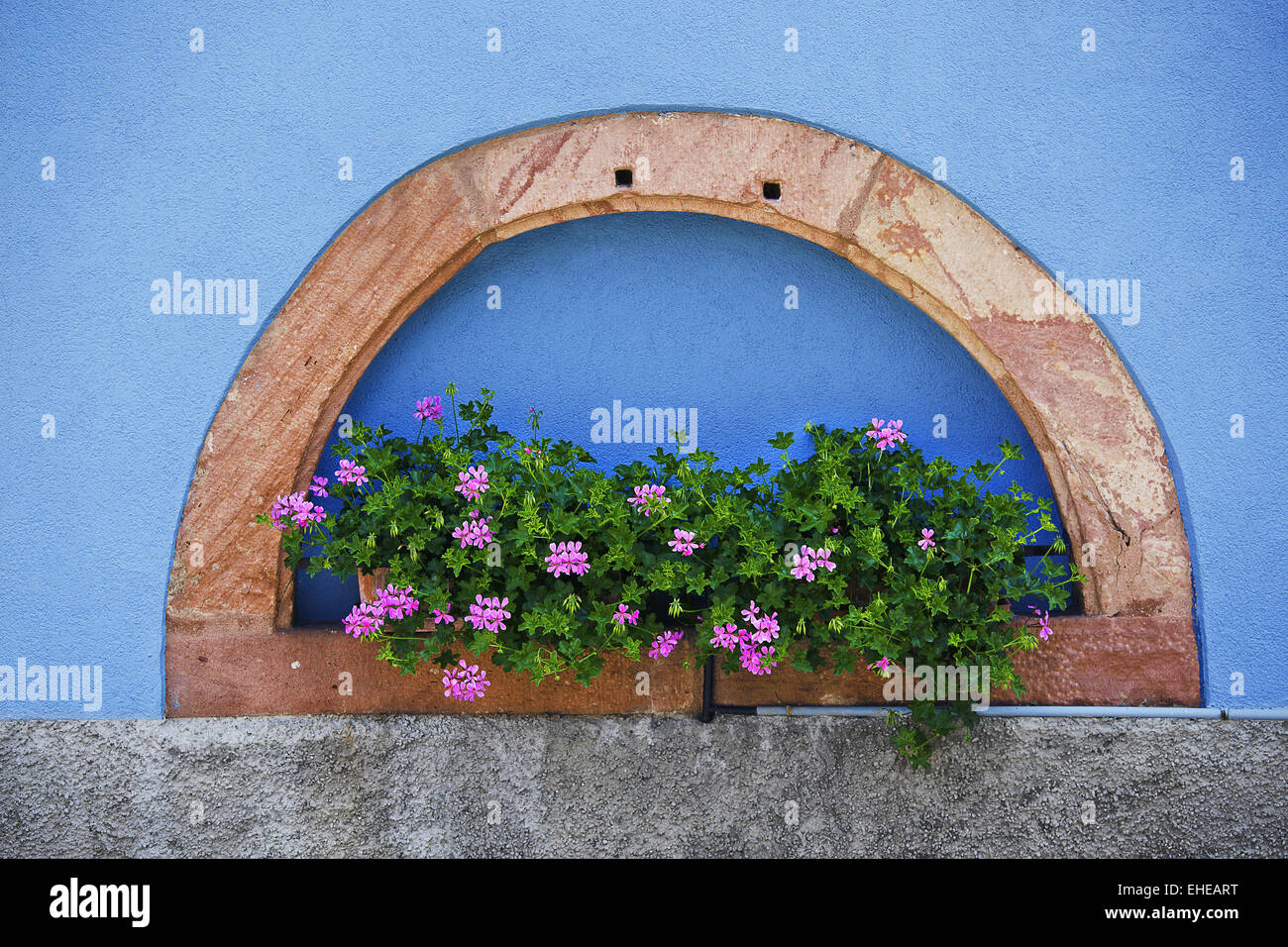 House wall in blossom, Blienschwiller, France Stock Photo