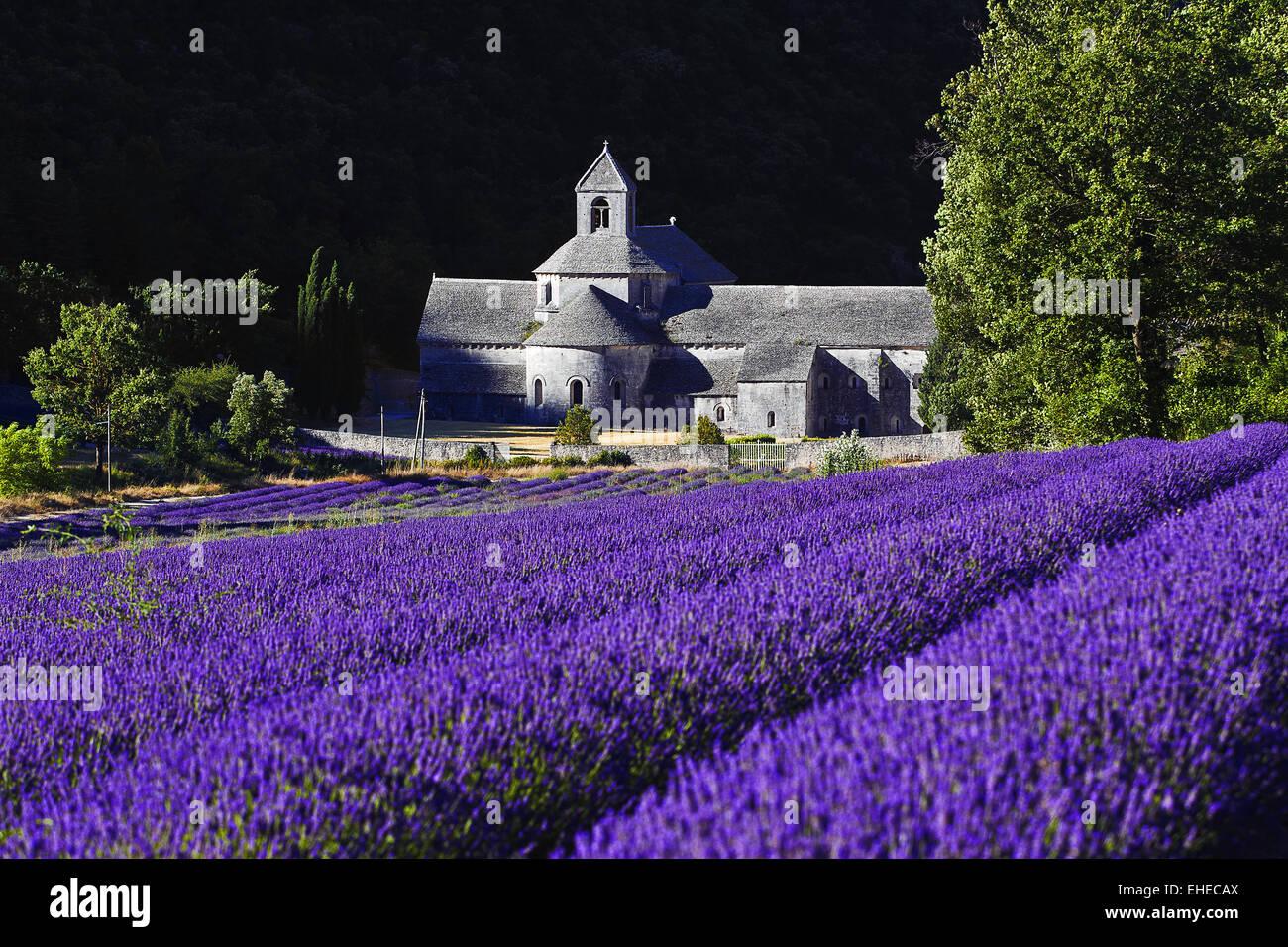 Abbey de Senanque, Vaucluse, Provence, France Stock Photo