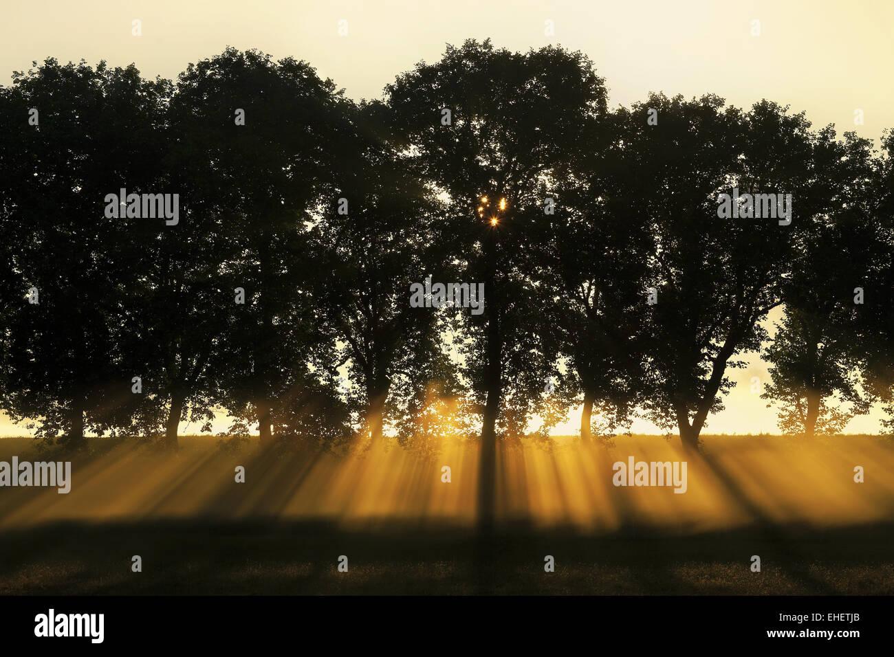 sunrays behind tree-lined, Burgundy, France - Stock Image