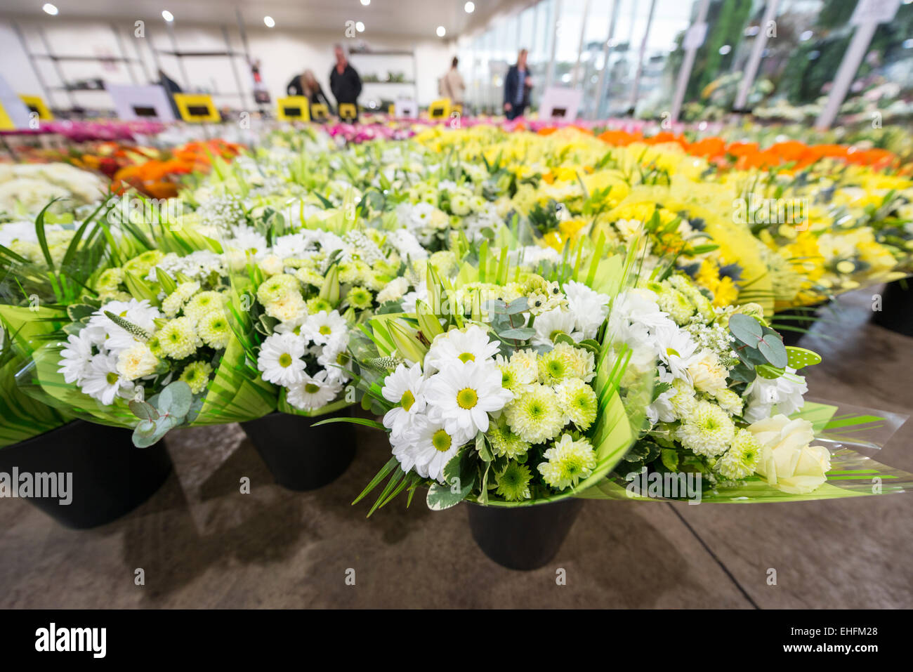 Wholesale florist stock photos wholesale florist stock images alamy bedfordshire uk 13th march 2015 a mass of colourful flowers are on mightylinksfo