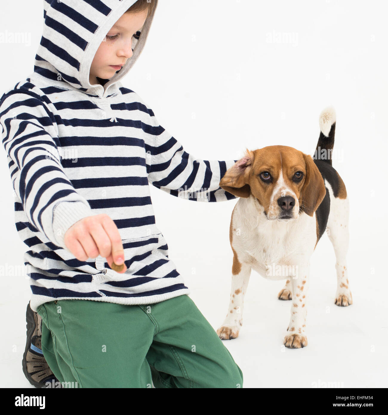 Boy training obedience to his beagle dog - Stock Image