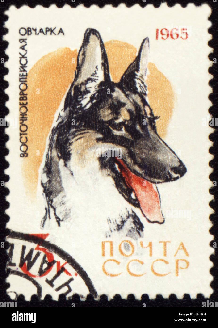 Car Window Sticker German Shepherd Long Haired Alsation GSD Dog Art Sign TYP3