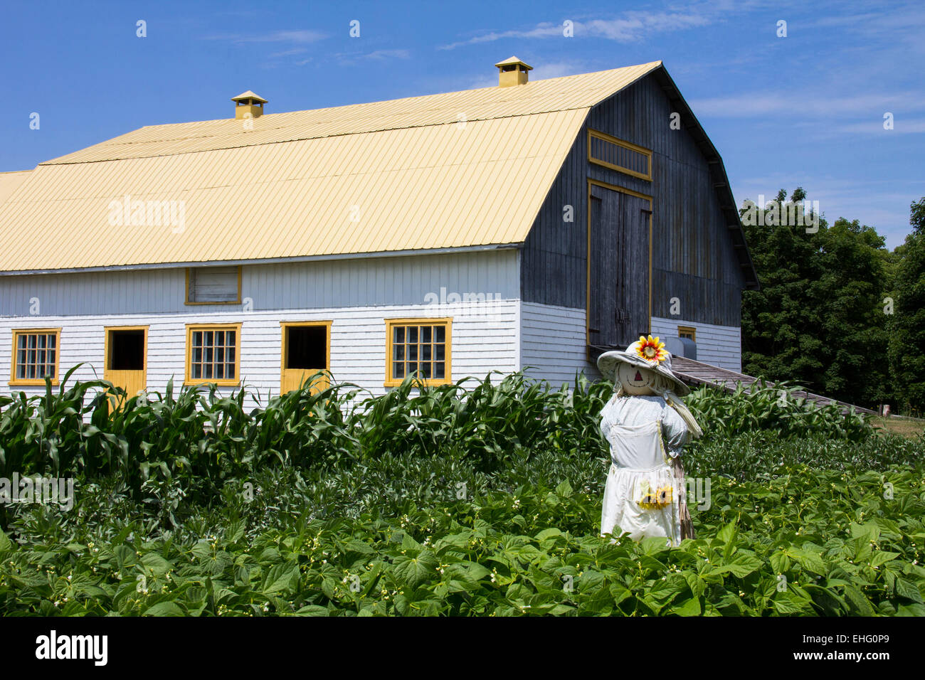 Farm scenes such as this one reflect the rural charm of Isle-aux-Coudres in the Charlevoix Region of Quebec. - Stock Image