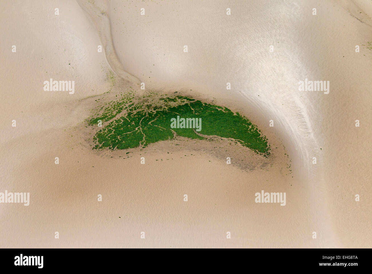 Aerial view of tidal mudflats and seagrass / eelgrass (Zostera marina), Schleswig-Holstein Wadden Sea National Park, - Stock Image