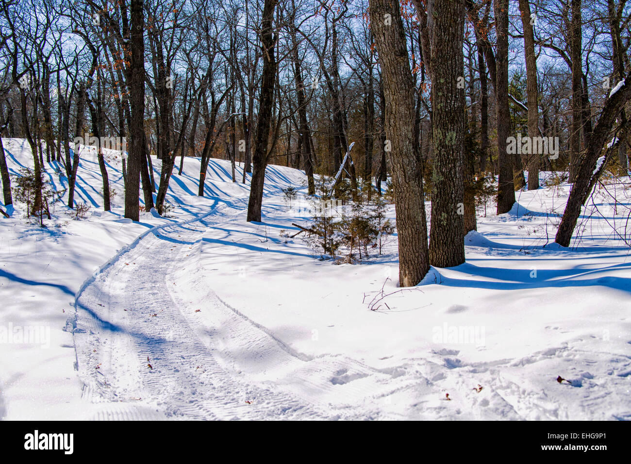 Snowmobile track in hardwood forest. - Stock Image