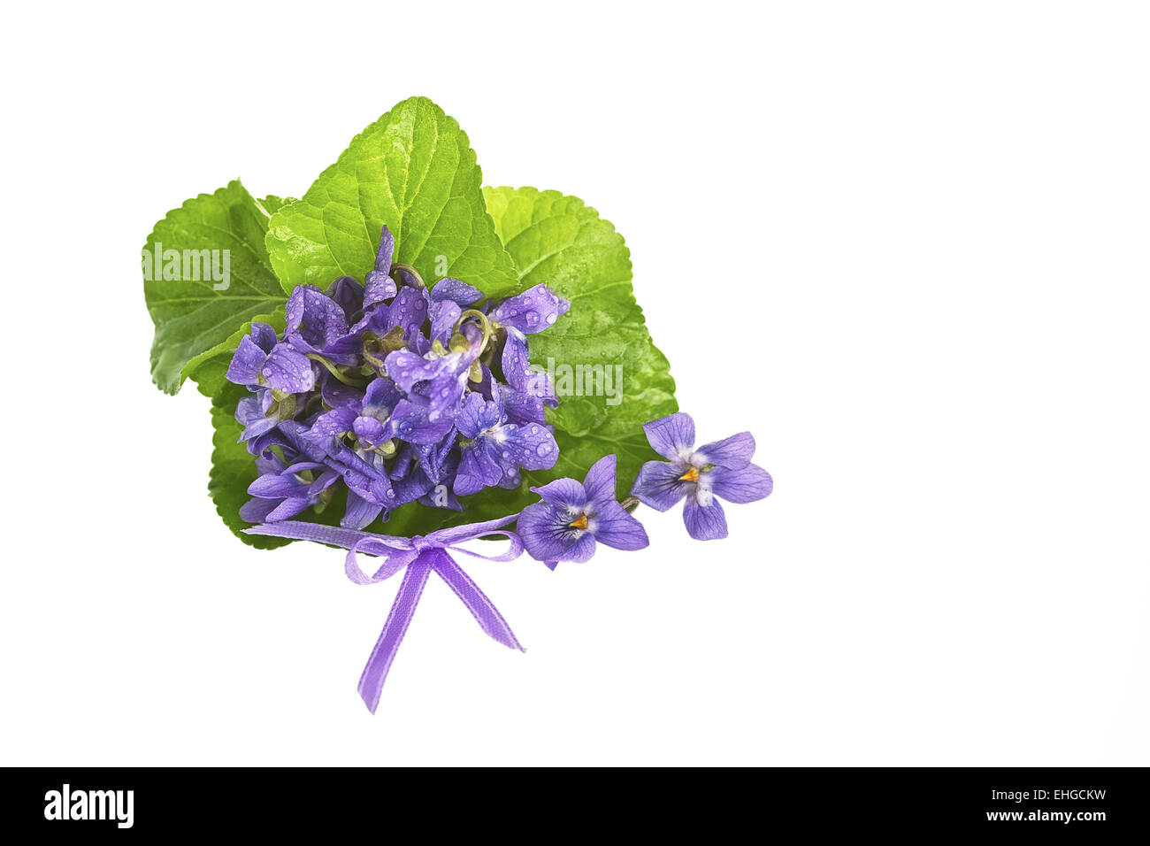 Violet bunch - Stock Image