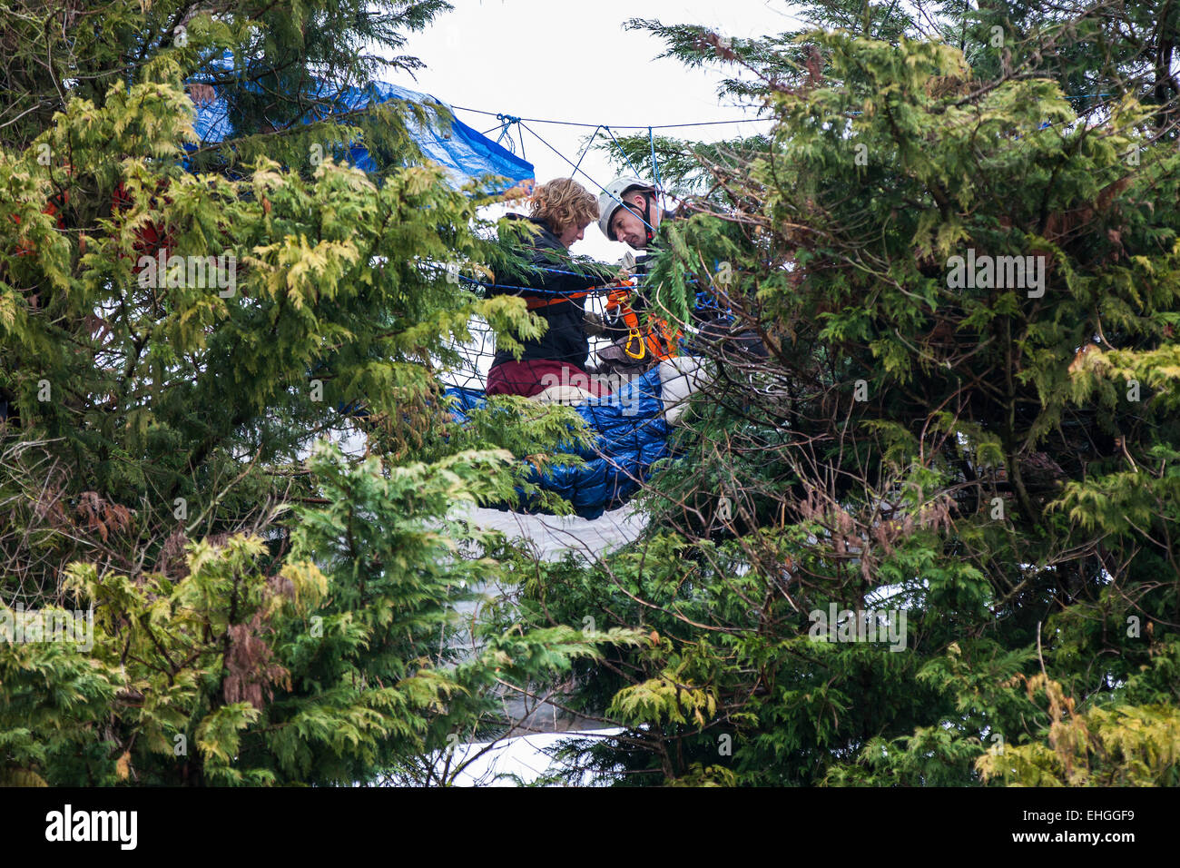 Bristol, UK. 13th Mar, 2015. Bailiffs and specialist climbers evicted more tree protesters who are preventing construction - Stock Image