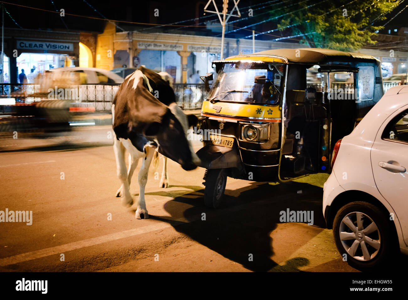 A cow obstructing a Tuk-Tuk taxi within the Pink City, Jaipur. - Stock Image