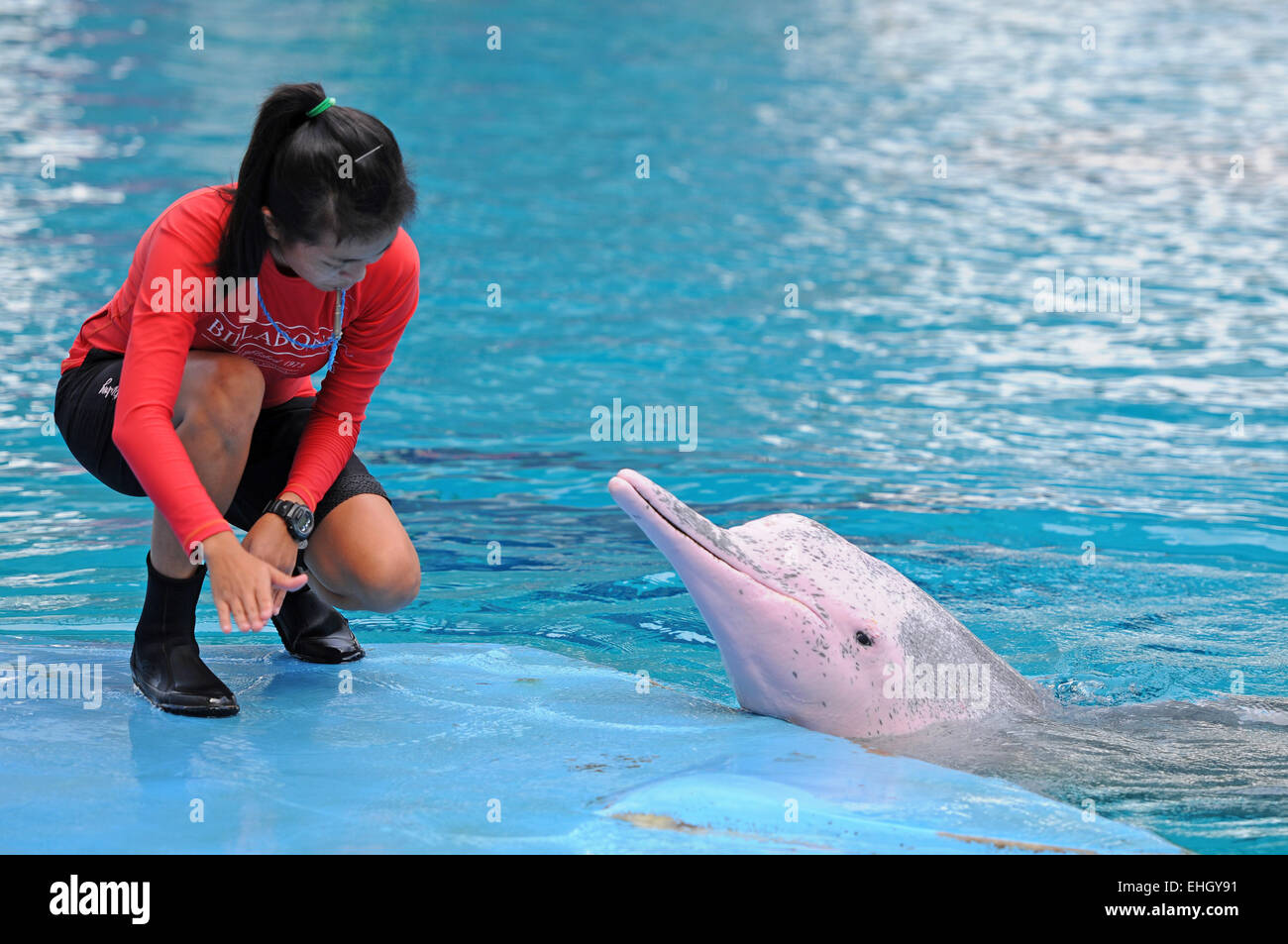 Rosafarbene Delphine / Pink dolphins - Stock Image