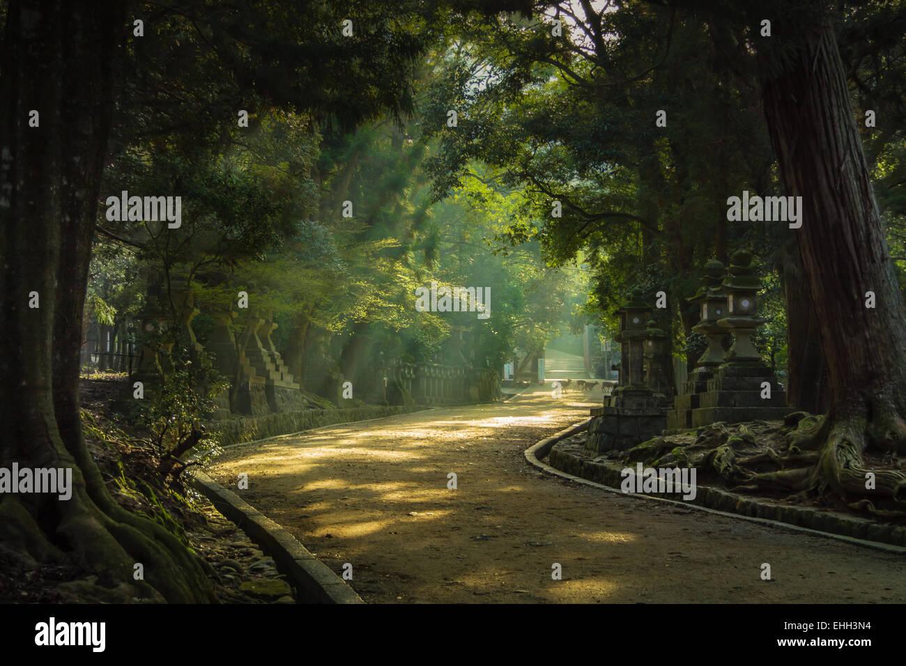 Spring morning sunshine illuminates the forest path to Kasuga Grand Shrine, Nara, Japan. Deer cross the path in - Stock Image