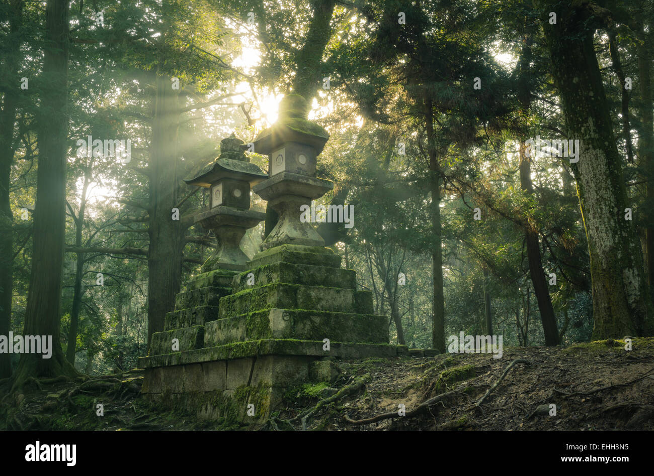 Morning sun shines behind two ancient Japanese stone lanterns in the forest near Kasuga Grand Shrine, Nara, Japan - Stock Image