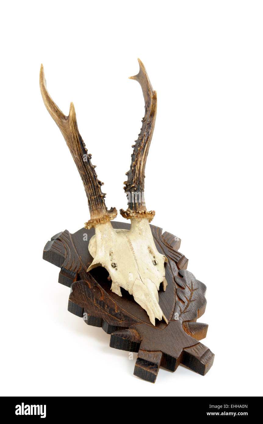 Geweih / Antler Stock Photo
