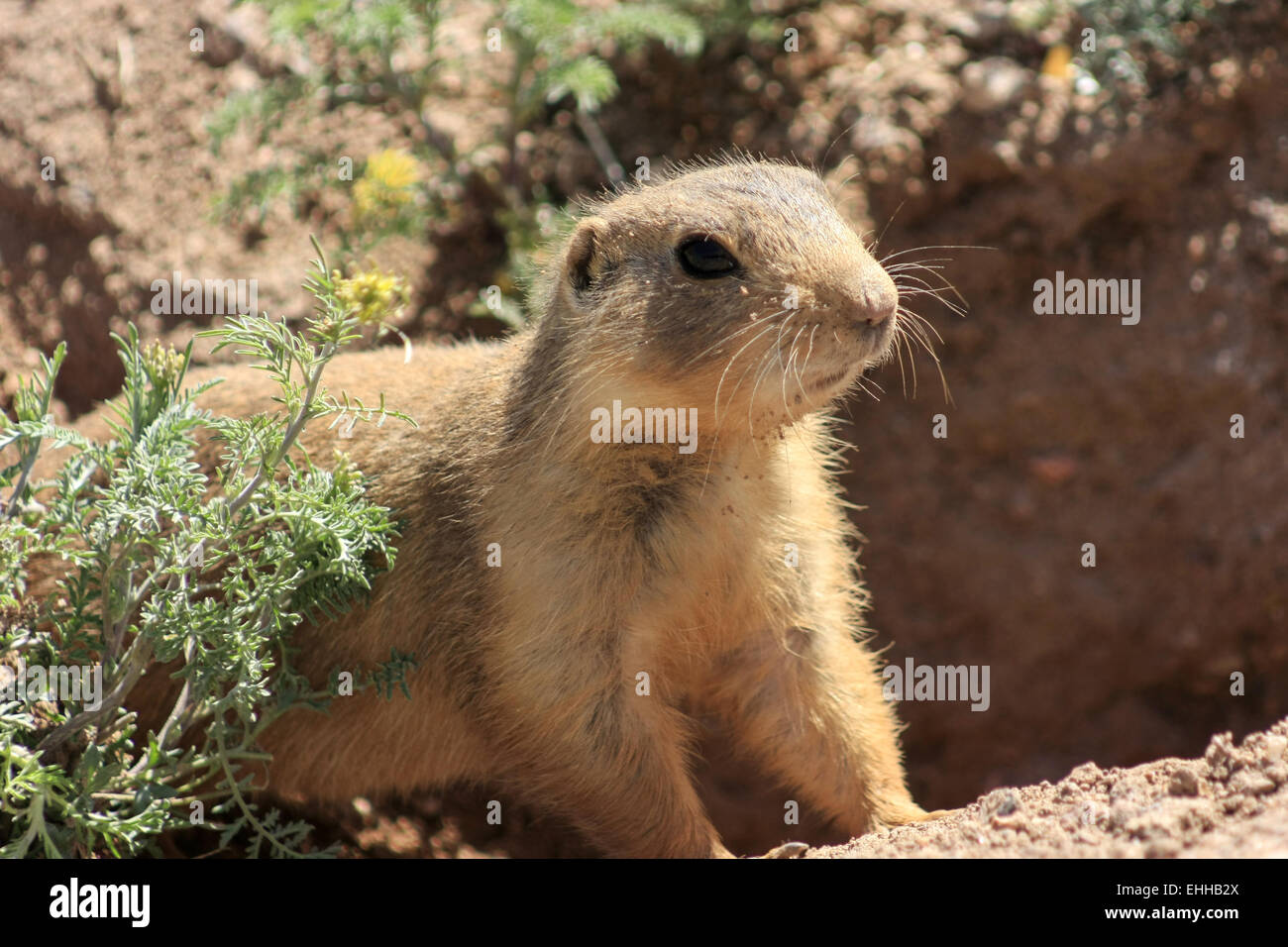 Tiere in New Mexico - Stock Image