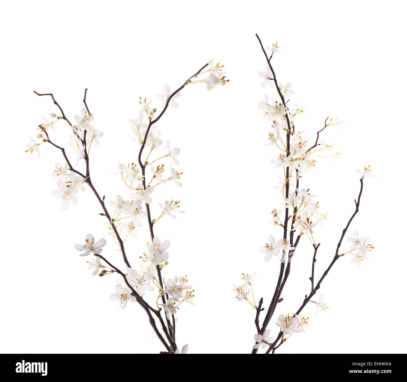 Artificial white sakura flower isolated - Stock Image
