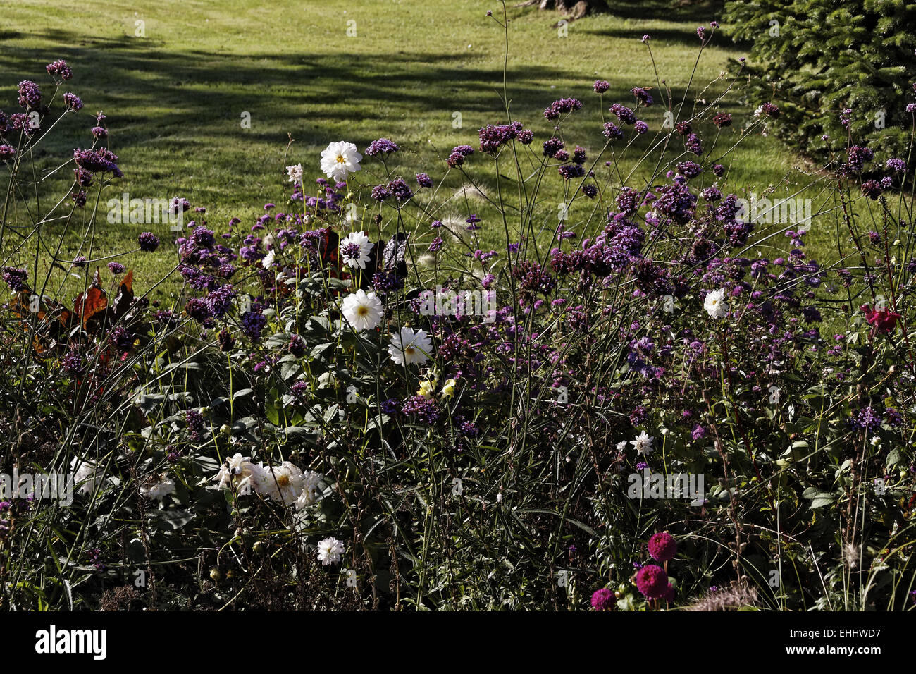 Flowerbed in autumn in a park in Germany Stock Photo