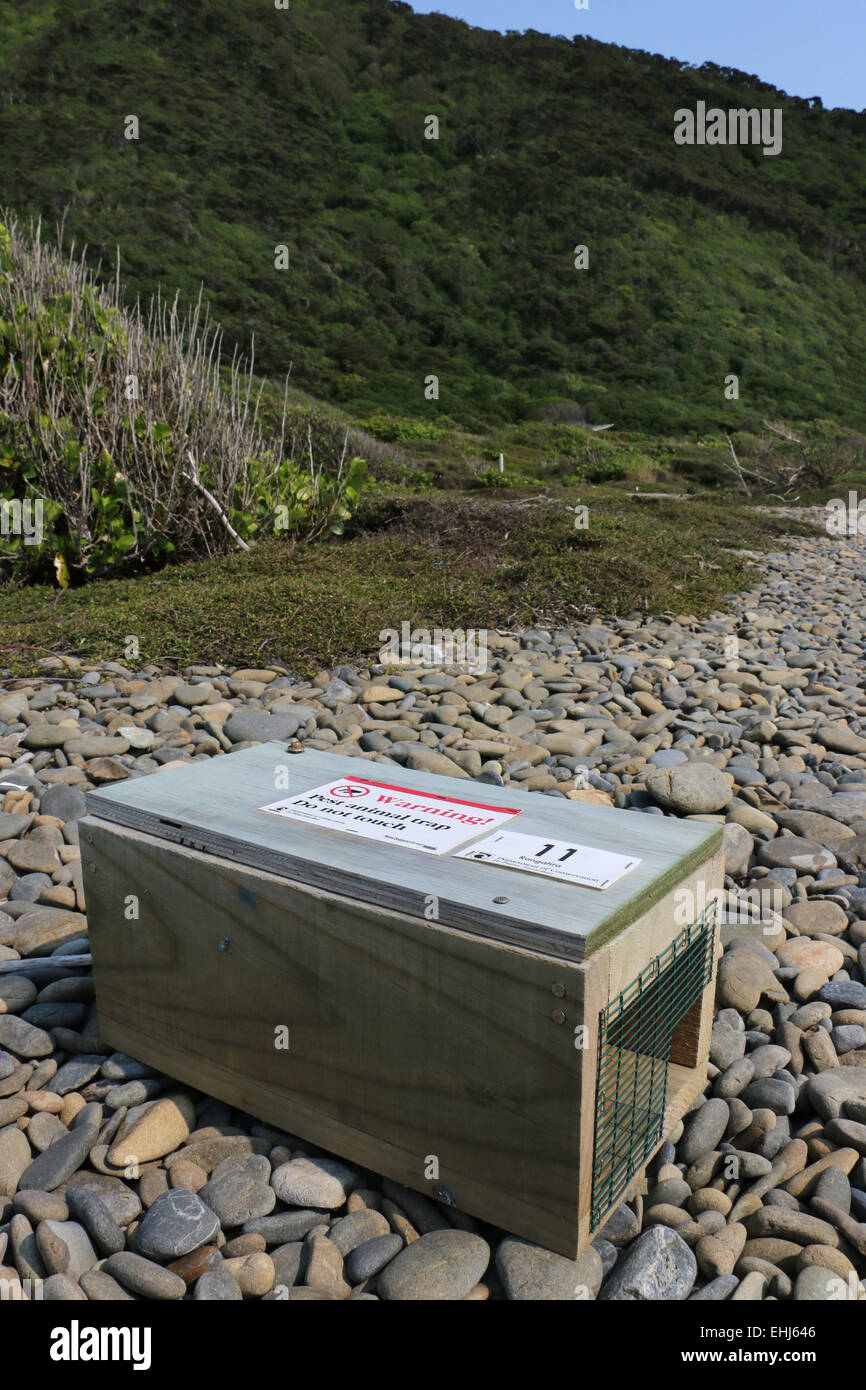 Warning sign on Poison bait trap to control predators on Kapiti Island New Zealand - Stock Image
