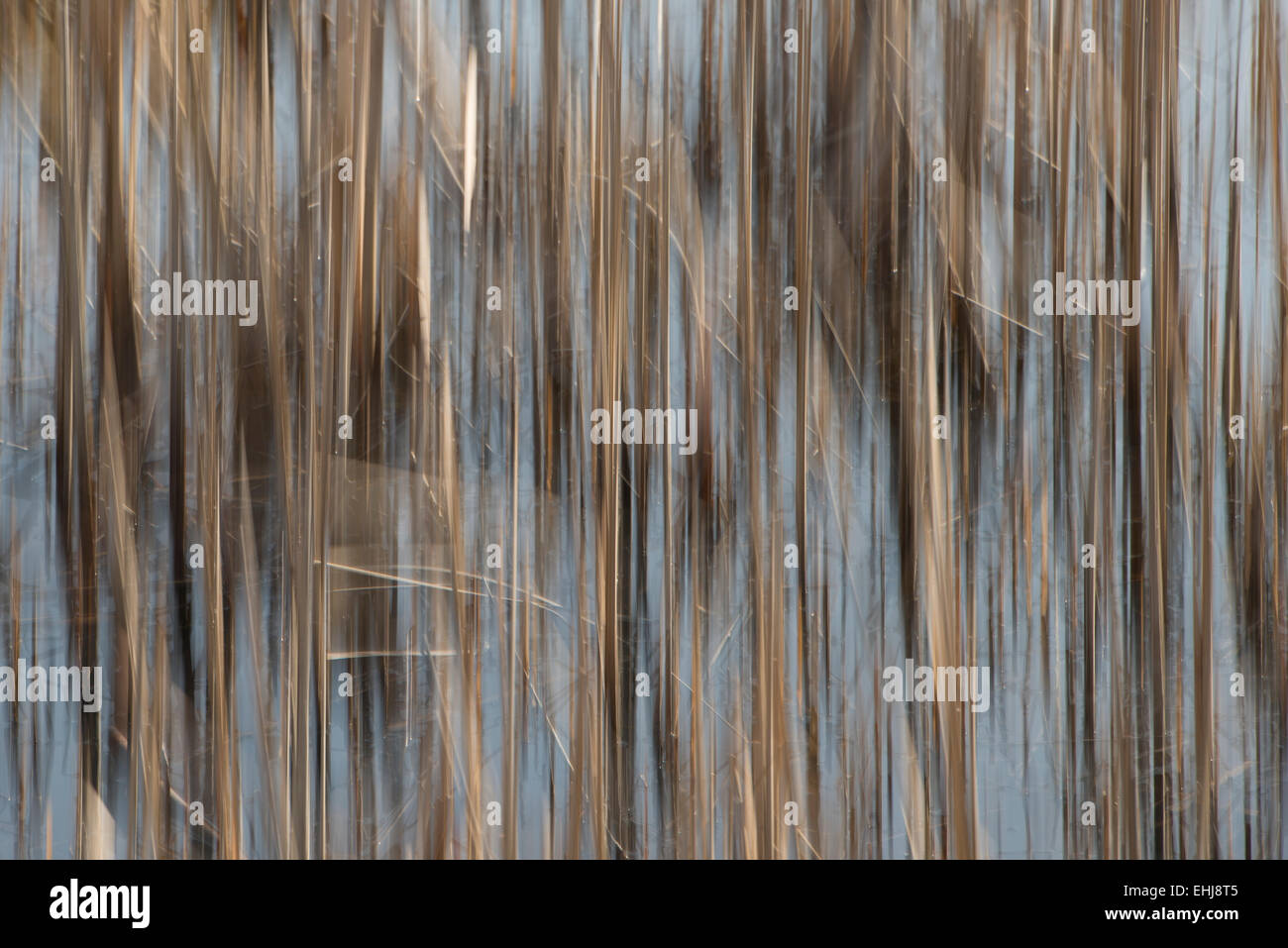 Abstract cane stems - Stock Image