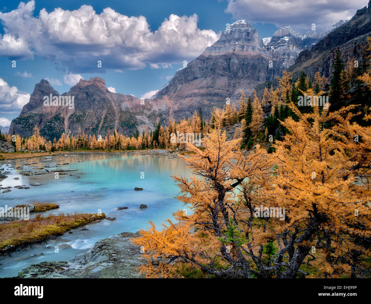 Mt Huber and fall colored larch. Opabin Plateau of British Columbia's Canadian Rockies and Yoho National Park. - Stock Image