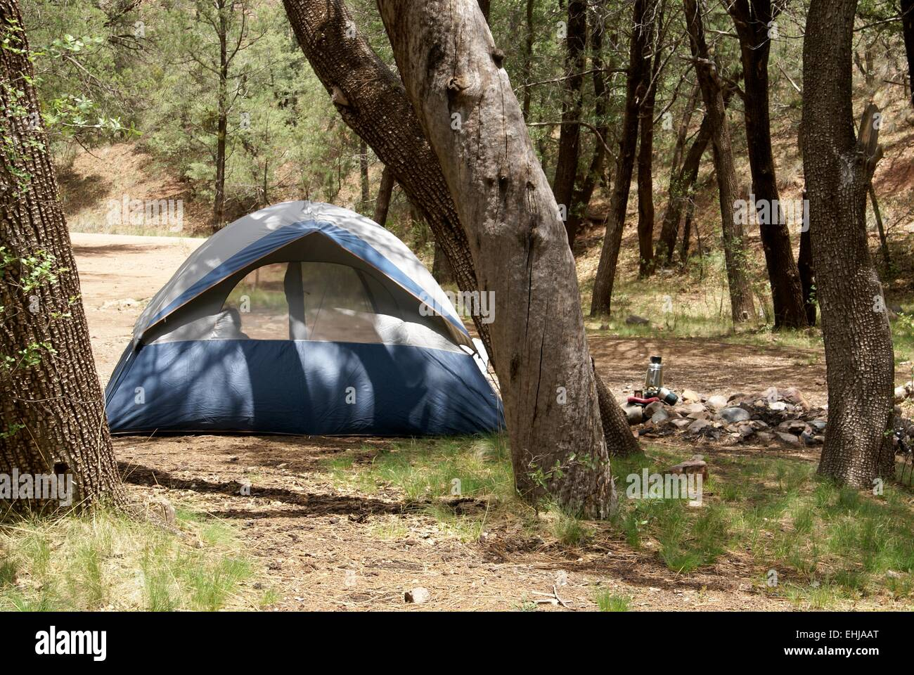 Tent in the forest at a primitive campground - Stock Image