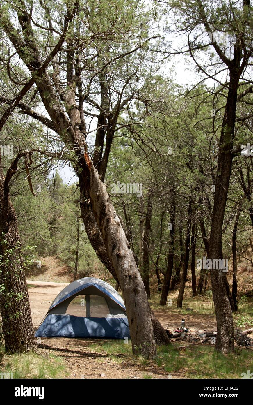 Camping in the forest. Tent sits among trees at a primitive campground in vertical format - Stock Image