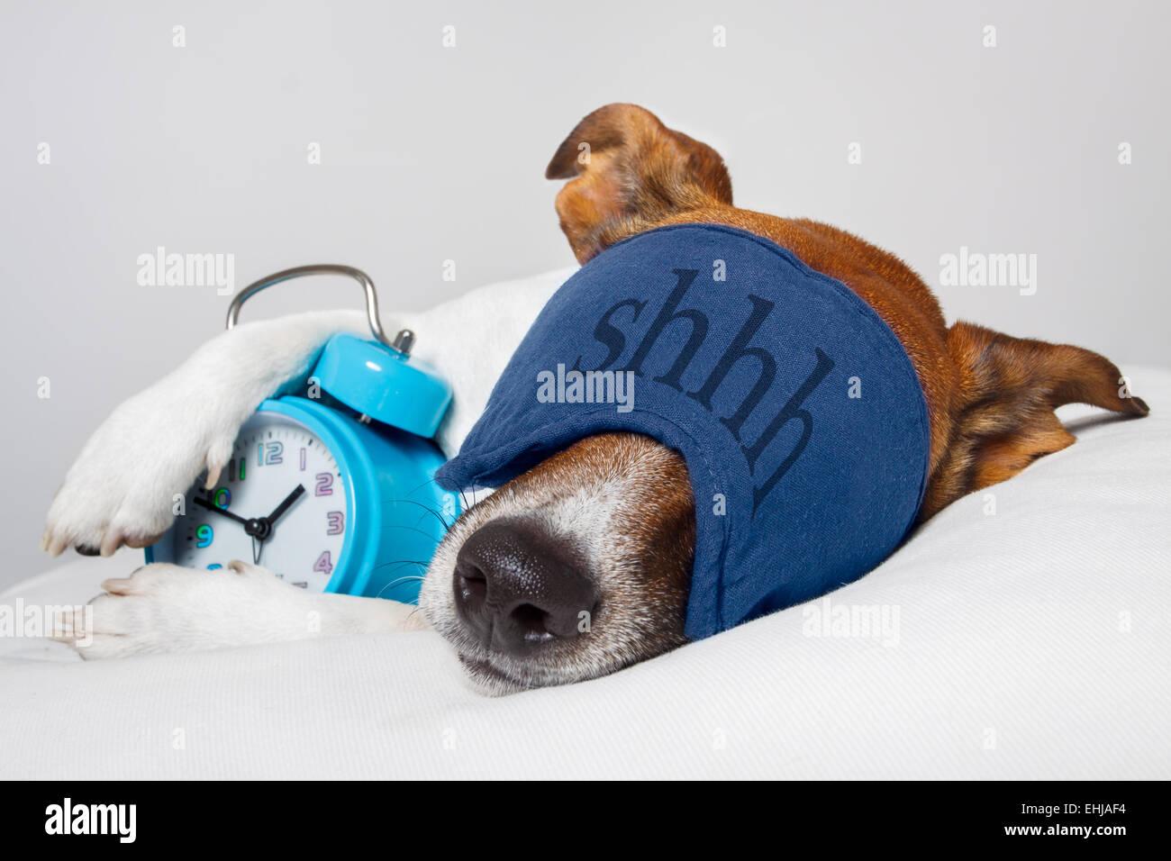 Dog sleeping with alarm clock and sleeping mask - Stock Image